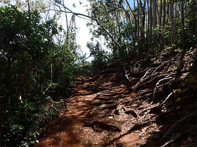アイエア・ループ・トレイル木の根っこ