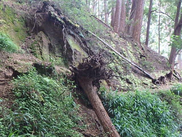 アイエア・ループ・トレイル倒木